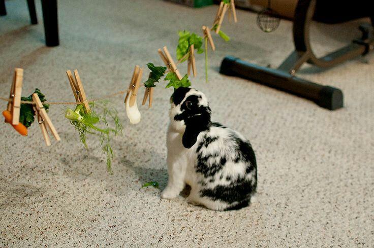 Boredom buster for bunnies.