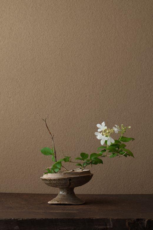 by Toshirō Kawase ( 川瀬敏郎 | 一日一花 | 2012/6/12 ):