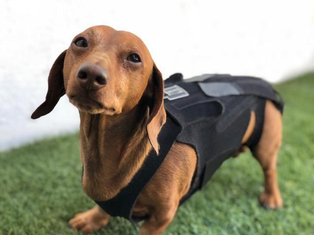 L Il Back Bracer Dog Back Brace Dog Braces Dog Leg Braces