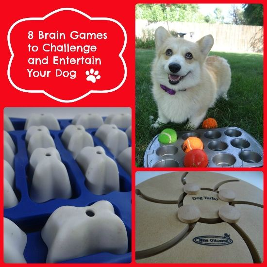 10 Brain Games to Challenge and Entertain Your Pet