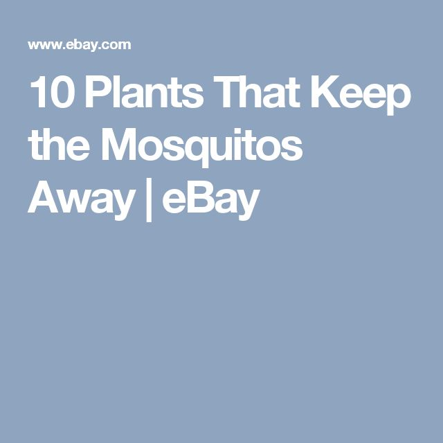 10 Plants That Keep the Mosquitos Away | eBay