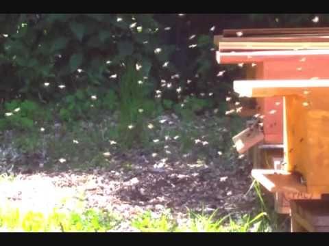 Nice Die Bienenkiste Bienen halten einfach und nat rlich