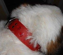 Hundmassage och stretching. Nackskador mm