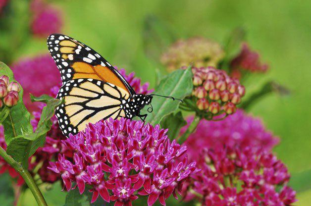 Gardening For Birds And Butterflies Magazine