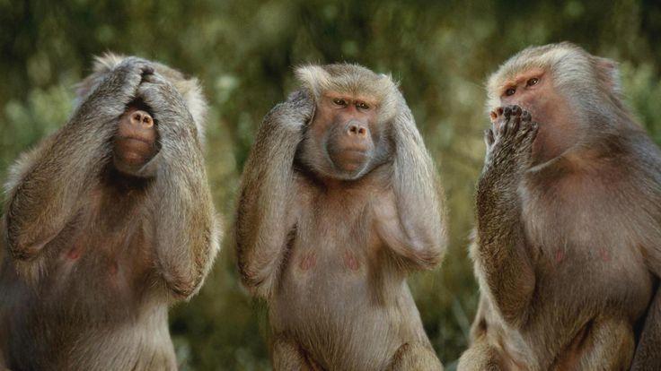 monkey see no evil speak no evil hear no evil