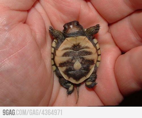 Baby turtle! SOOO cute!