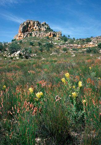 Jonaskop, Riviersonderend Mountains, Western Cape, South Africa