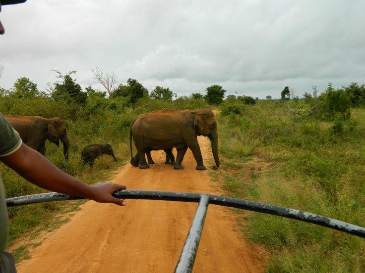 Země, kde slon je největší kamarád :) #SriLanka