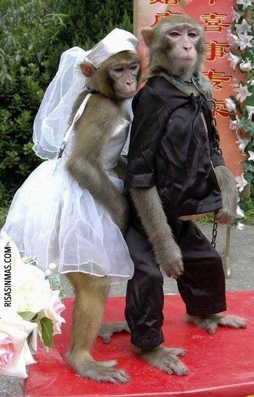 La boda más mona