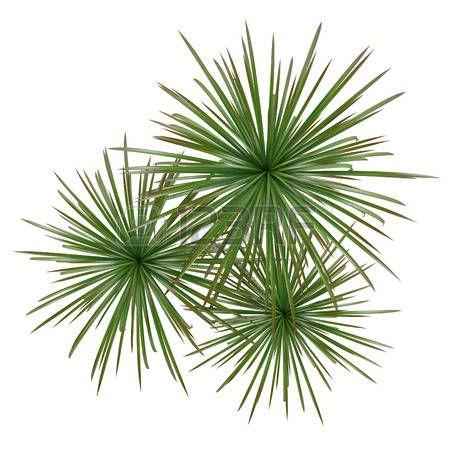30 best images on pinterest plants for Vegetacion ornamental