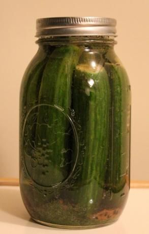Homemade Kosher Dill Pickles
