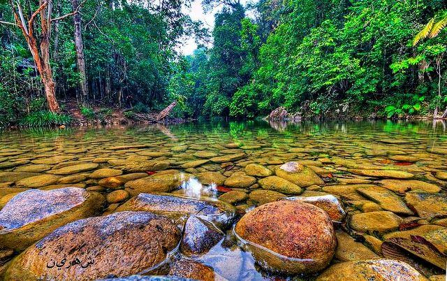 Information Dose: Endau-Rompin Johor National Park http://informationdose.blogspot.com/2014/08/endau-rompin-johor-national-park.html