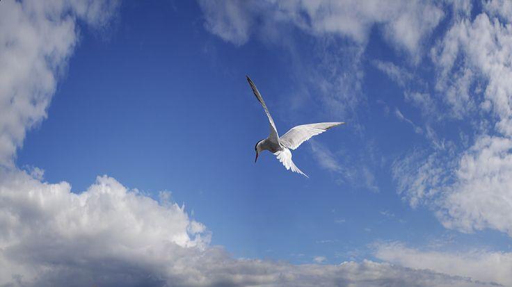 Believe me! Iam free by Carlos Santero - Photo 214674821 / 500px