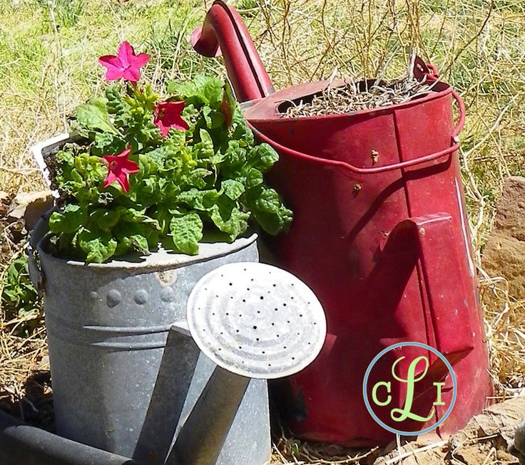 This clever use of the rustic watering can is basically a gardener's dream. The only catch? You'll need to invest in a watering can to water your watering can container gardens.