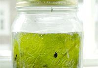 Lav en mikroverden i et syltetøjsglas