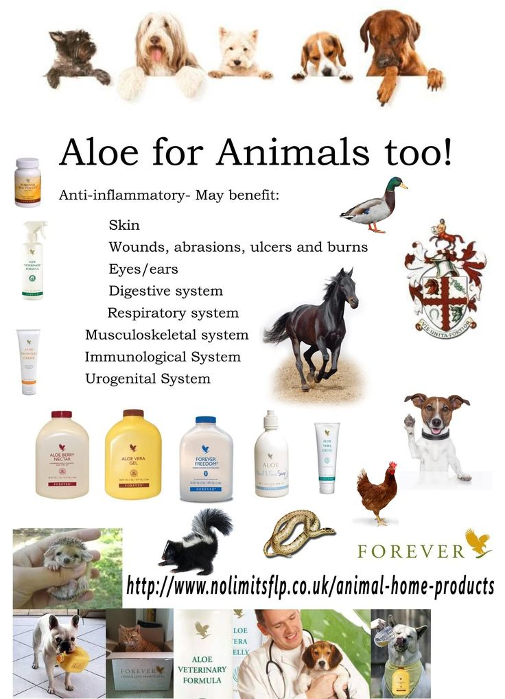 ALOE MIRACLES FOR ALL OF US ANIMALS http://www.nolimitsflp.co.uk/animal-home-products