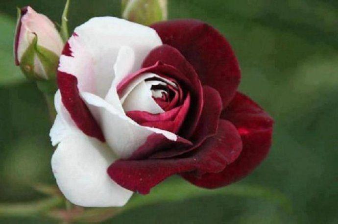 Las flores mas raras y hermosas.
