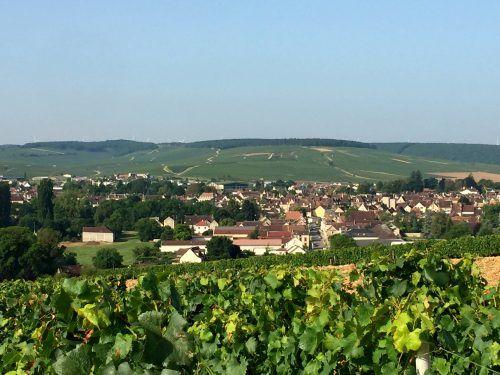 Tour guiado pela região de Chablis, na Borgonha | Conexão Paris