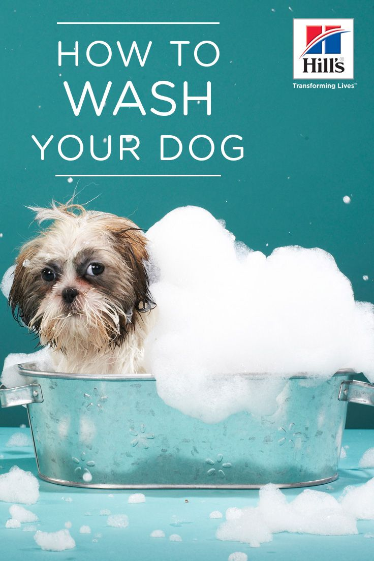 Washing Your Dog 8 Supplies You Should Have Dog Care Pregnant