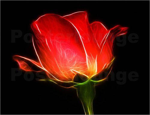 Rosen sind oftmals Teil von Orts- und Familiennamen und damit häufig in Wappen anzutreffen. Auch ein Bild einer Rose im eigenen Zuhause kann eine besondere Verbundenheit zu dieser Blume wiederspiegeln.