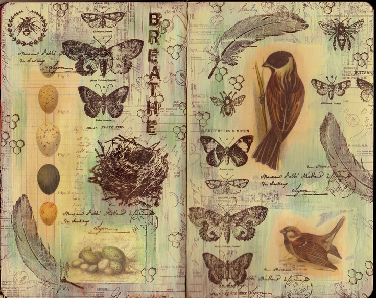 Have the evolution of a butterfly sketched across the page in black ink pen (artline)...