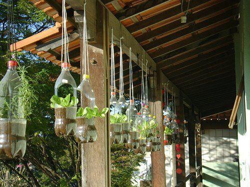 plant in bottle outside