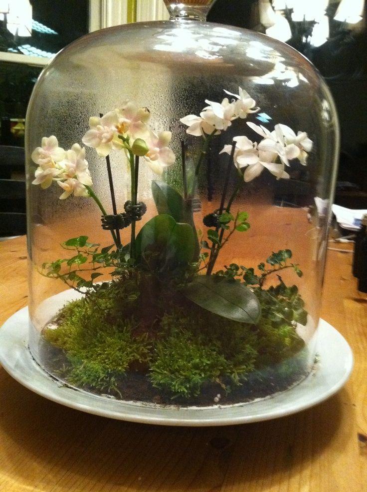 mini orchid in terrarium