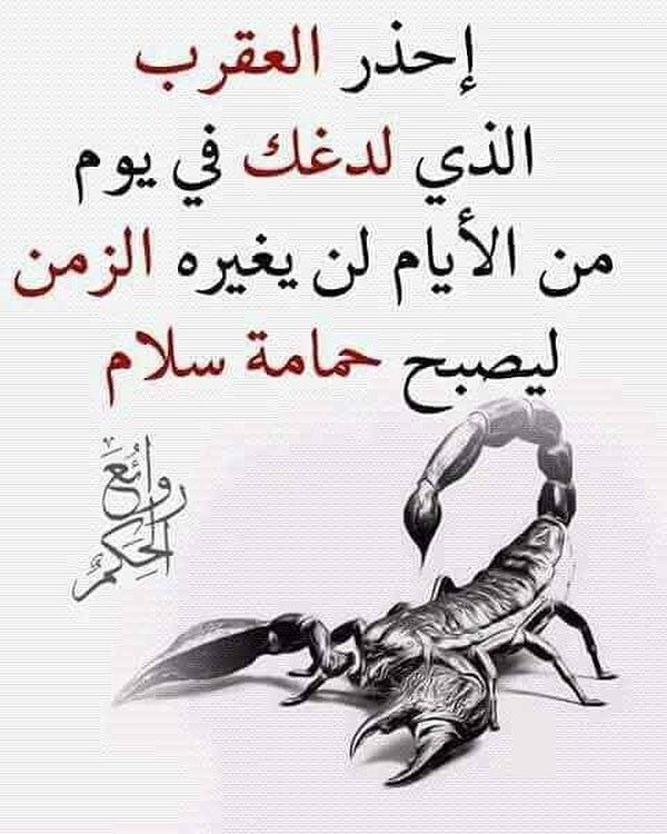 Once A Scorpion Always A Scorpion نصحتك لم تنتصح و الطبع فيك غالب ديل الكلب لم يتعدل لو علقوا فيه قالب Words Quotes Ex Quotes Cool Words