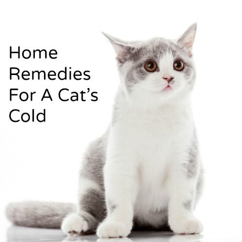 Home Remedy For A Cat's Cold | Hillbilly Housewife