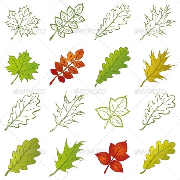 Leaves of Plants Set  #GraphicRiver         Leaves of different plants, set of nature objects and pictograms – elements for design   Vector EPS 8 plus AI CS 5 plus high-quality Jpeg. Editable vector file, containing only vector shapes. Contains gradients. No transparencies.     Created: 29June13 GraphicsFilesIncluded: JPGImage #VectorEPS #AIIllustrator Layered: No MinimumAdobeCSVersion: CS5 Tags: beautiful #botanical #botany #collection #dogrose #element #emblem #environment #flora #forest…