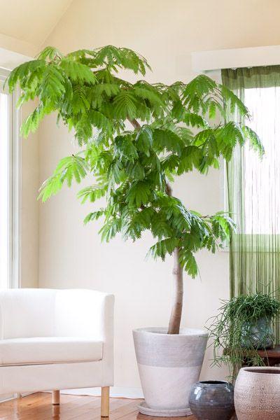 エバーフレッシュ - 観葉植物(インテリアグリーン)通販、植え替え・メンテナンス | Regalo