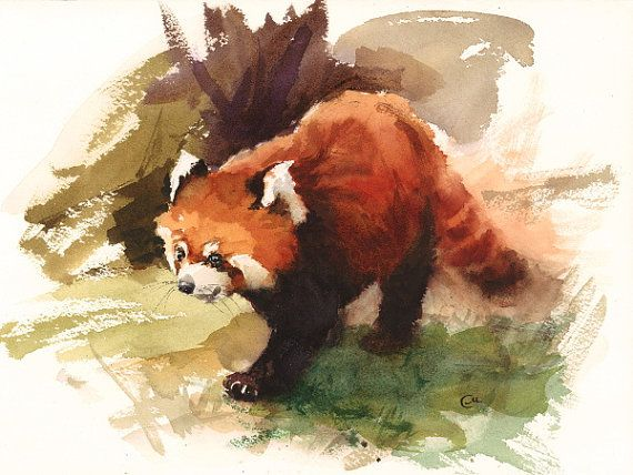 Watercolor Red Panda  Original Painting 9x12 by CMwatercolors