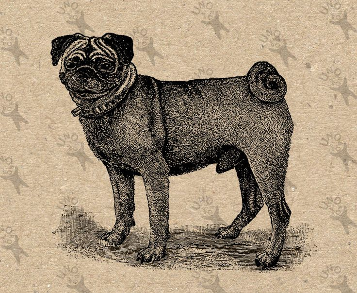 Vintage image Pug Dog Instant Download Digital printable clipart graphic Burlap Fabric Transfer Iron On  Decor T-shirt Scrapbooking  300dpi by UnoPrint on Etsy