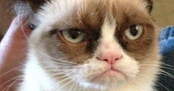Grumpy Cat has about had it... | Wonderfull Life 2 - CENSORSHIPWTF | Pinterest | Grumpy cats and Memes