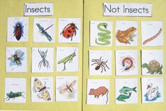 Kindergarten adn Preschool bug lesson plans