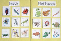Kindergarten adn Preschool bug lesson plans,  Go To www.likegossip.com to get more Gossip News!