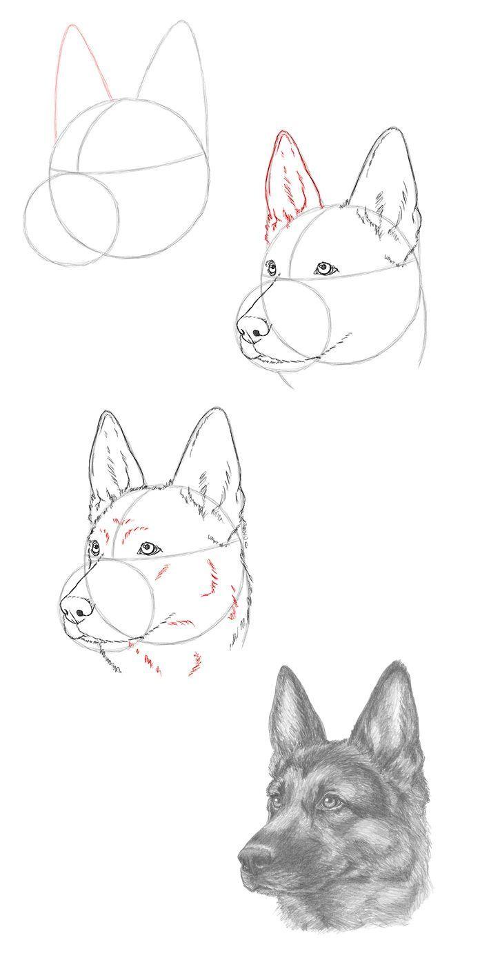 Zeichnen Sie einen Schäferhund