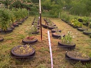 tire gardening ideas pictures | Tire-Garden-Dale-McPherson-Burlison-TN