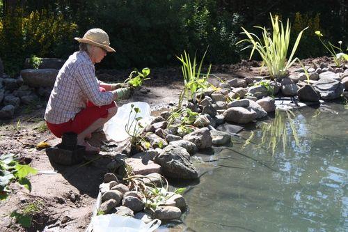 Några tips om vad man bör tänka vid placering av dammen: Planering är A och O när det gäller dammbyggnation. För att dammen ska få det utseende du önskar och för att växter och fiskar ska trivas är det viktigt att du först tänker igenom placeringen av dammen. För att växter och fiskar ska trivas …