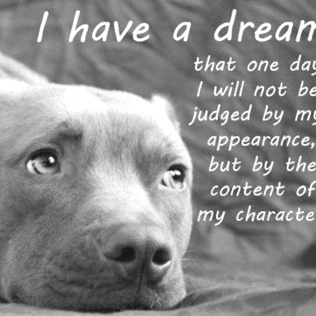 Pit bulls<3: Animals, Dogs, Quotes, Dreams, Pet, So True