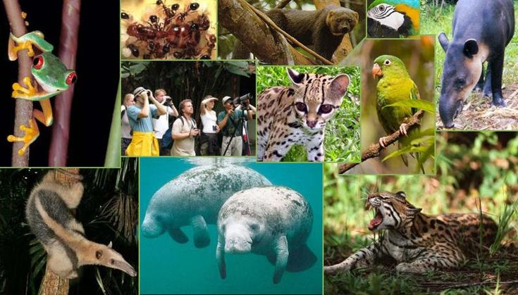 Caribbean Animals: 130 Best Images About Belize Flora And Fauna On Pinterest