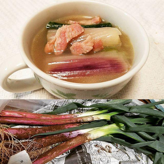 2016/11/17 02:35:50 coconutsparty 赤ネギのスープ  甘くてやわらかくて美味しい  #赤ネギ#茨城県産#長ネギ#鉄分#カルシウム#ビタミンC#葉酸#シンプルな味#風邪予防#スープ#ベーコン#soup#レッドポアロ#野菜#vegetable#身体が温まる#ネギの青いところ好き#COOKPAD#お世話になります#とろとろ#甘い#健康#栄養  #健康