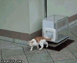 kitty elevator