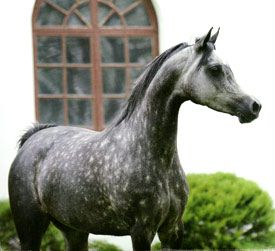 Pinta, Ekstern x Pilar. This is the mare who topped the 2009 Pride of Poland at 1,045,381 dollars.