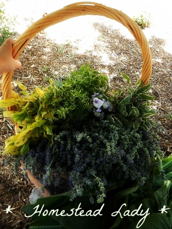 How to plan and plant a medicinal herb garden - Herb basket harvest - www.homesteadlady.com