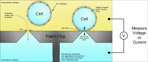 A schematic of planar patch clamp