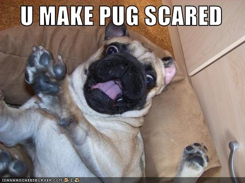 Funny pug pictures With Captions - Bing Images | Pugs for ...