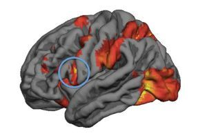 Mirror neuron activity predicts peoples decision-making in moral dilemmas