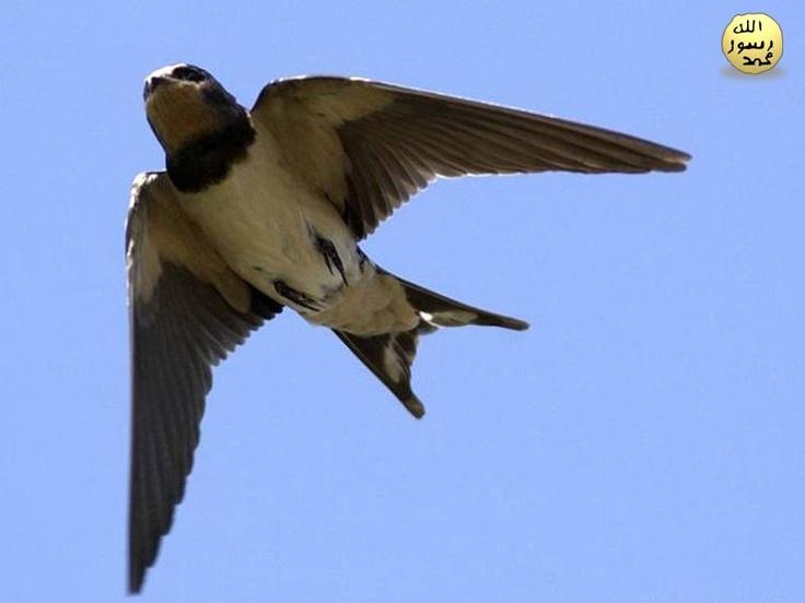 Kılıç kırlangıçları hayatlarının büyük bir kısmını havada geçirirler. Hatta uçarken bile uyuyabilirler. Kılıç kırlangıcının aerodinamik (havada kolay hareket etmesini sağlayan) vücut yapısı onun en hızlı hayvanlardan biri olmasını sağlamaktadır. Öyle ki bu kırlangıç türü saatte 150 kilometrelik bir hıza ulaşabilmektedir.
