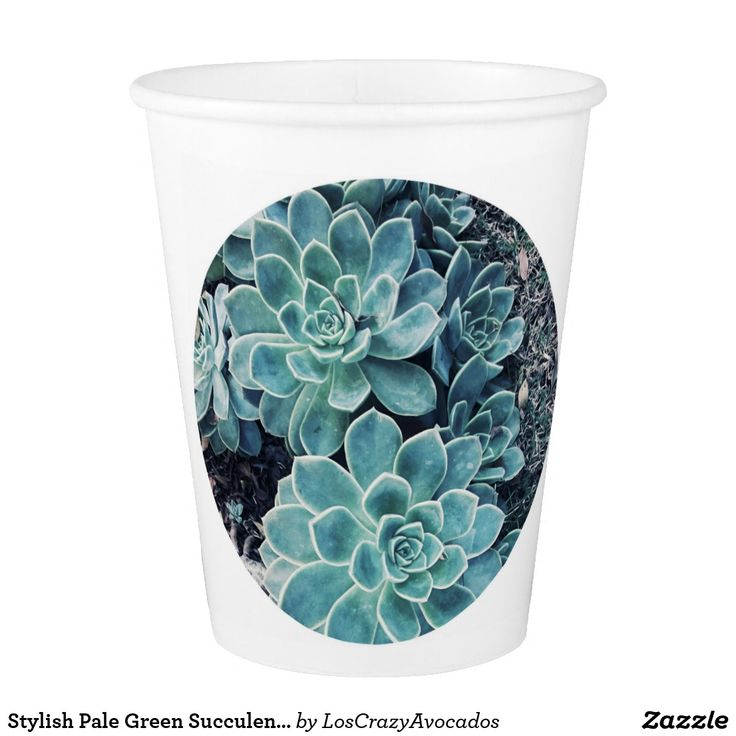 Stylish Pale Green Succulent In A Circle Paper Cup